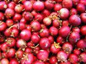503919_cranberries